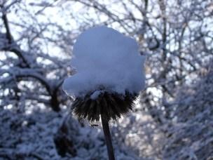 De ZintuigenTuin - Seizoen -Winter - (23)