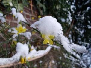 De ZintuigenTuin - Seizoen -Winter - (24)