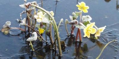 voorjaar - zintuigen - heerhugowaard