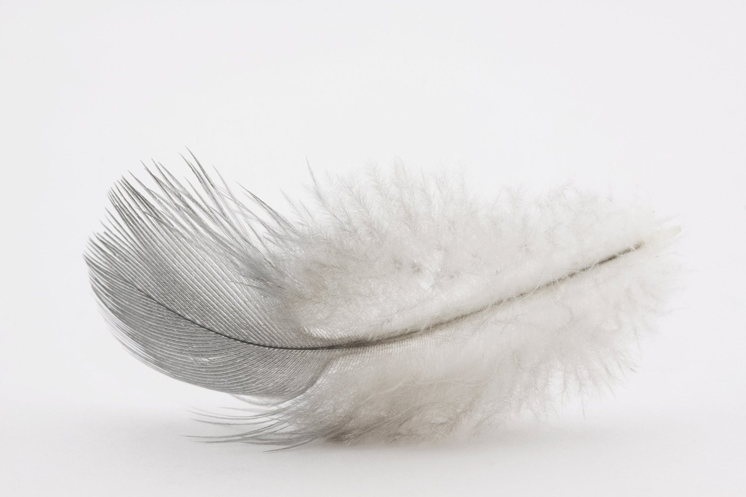 White Goose Feather Duvet – Down Feather Healthy Bedding Inc.