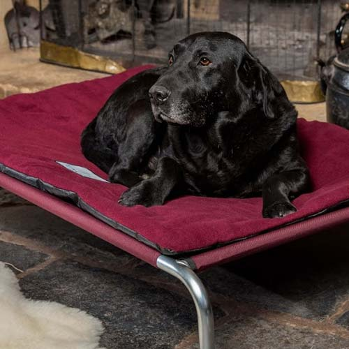 Luxury Raised Dog Bed with Polar Fleece Topper
