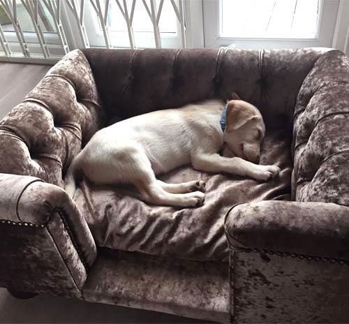 Sandringham Velvet Luxury Dog Bed in Truffle
