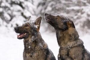 Winter-Pet-Health