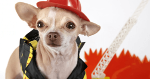 Fire Pet Safety Tips