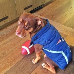 Brady's Dog Lua