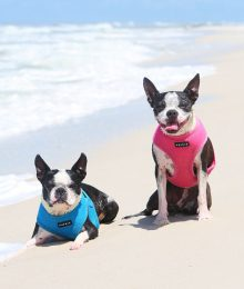dogs in life jacket