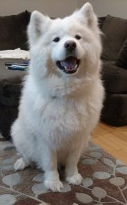 Kenji May Dog of the Month