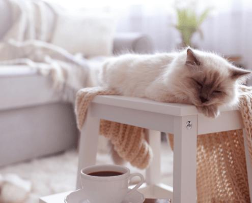 senior cat adoption