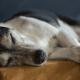 aging pets sleep