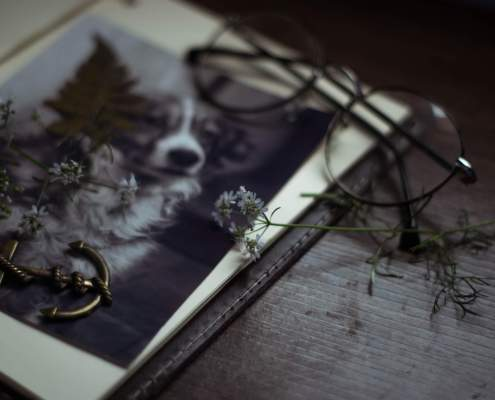 Plan A Memorial Service for Your Pet