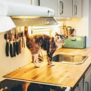 pet kitchen safety