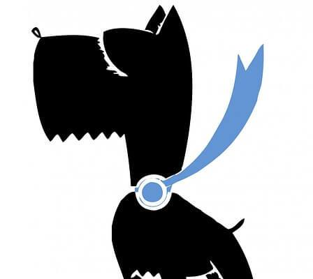 no-sew dog collar