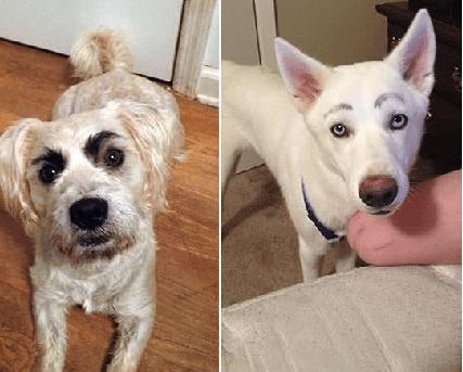 狗狗脸上「画两条眉毛」