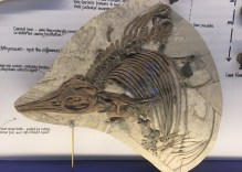 Finding Fossils in Dorset: The Etches Collection