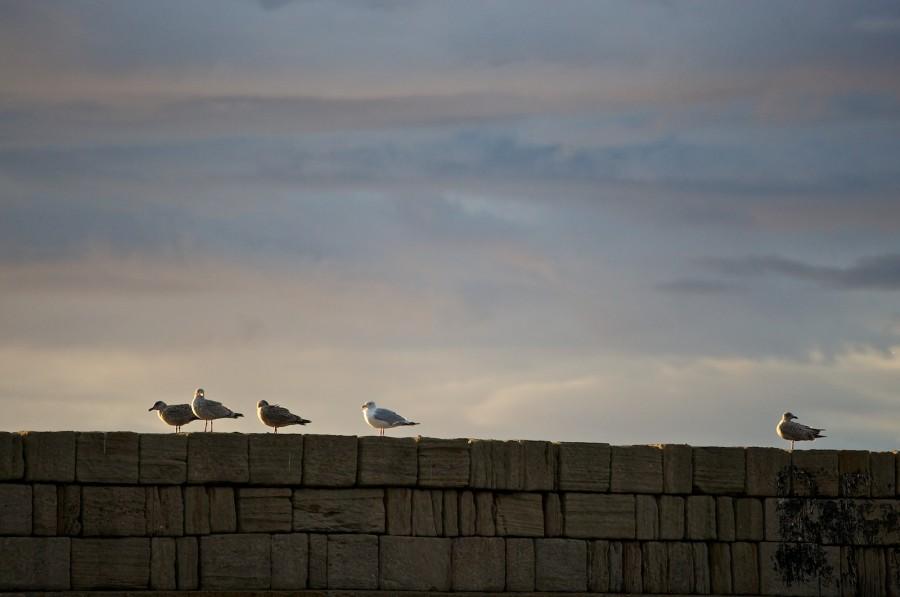 Abend im Hafen von Burghead