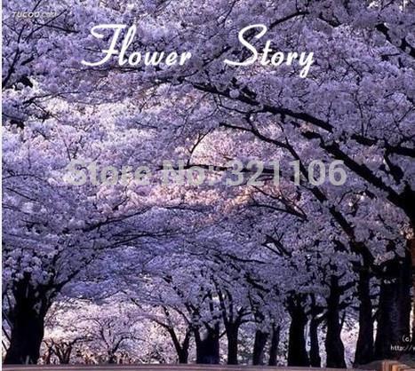 Buy Paulownia Tree Australia