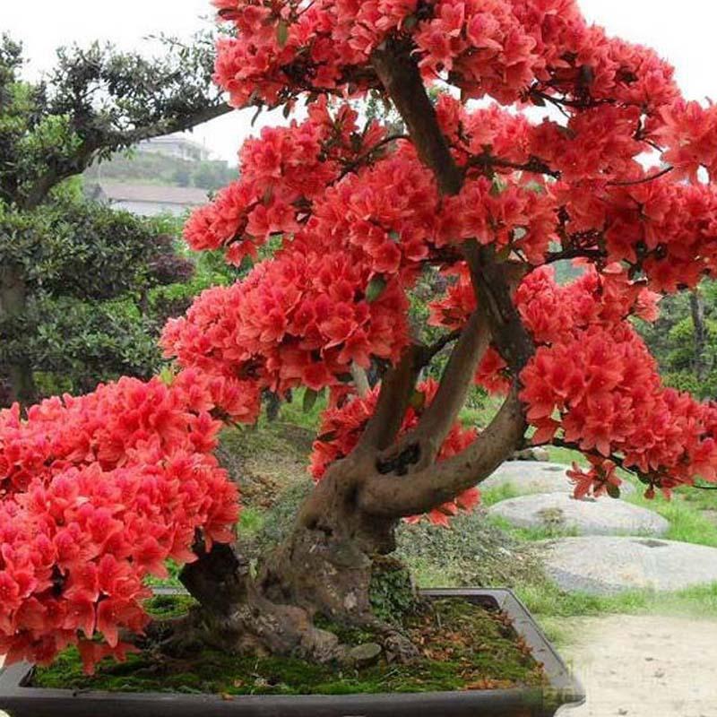 10 pcs red japanese