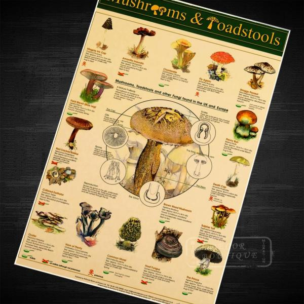 Mushrooms & Toadstools Fungi Kids Education Poster