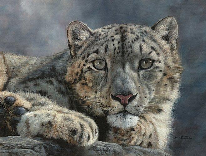 Snow Leopard 2019