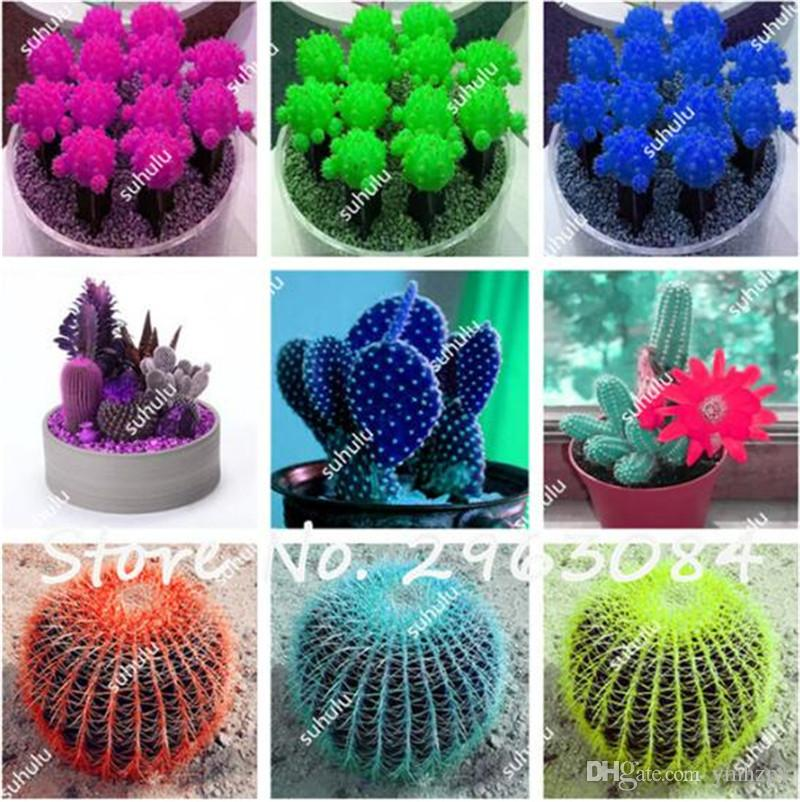 10 pcs succulents seeds