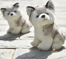 baby huskies online shopping