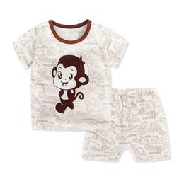 baby monkeys for sale