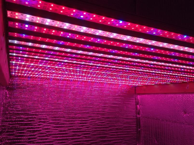 Chinese Led Grow Lights