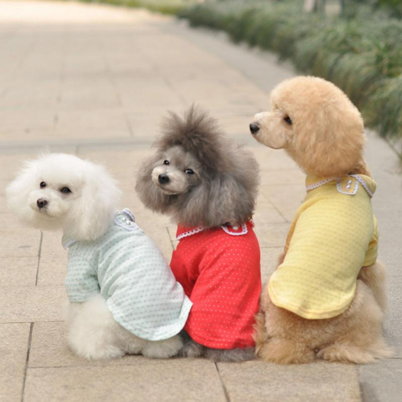 Discount Cute Small Dogs For Sale