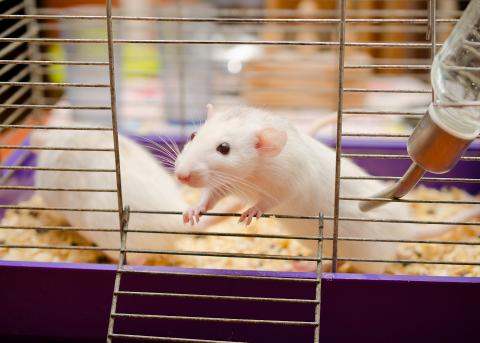 Seoul Hantavirus Frequently Asked Questions | Wisconsin Department ...