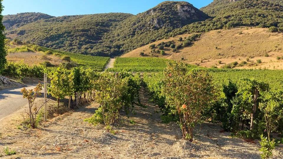 sambuca di sicilia di-giovanna sicilian winery landscape