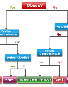 Diabetes types flowchart also which type of do  have genetic more common requires rh