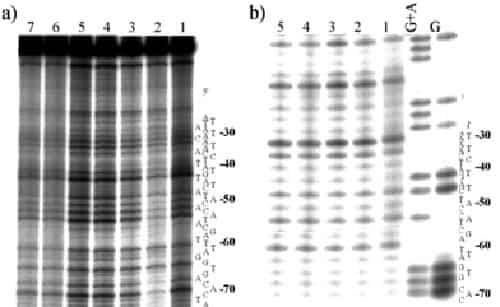 γονιδίου CXPAC5
