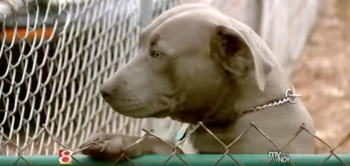 Just as the woman was running towards the back door, one of the two family's pit bull stood between her and the exit.