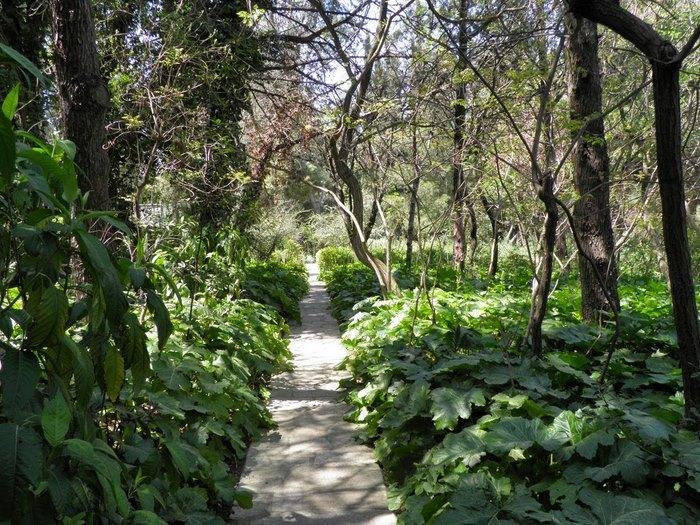 Ο μεγαλύτερος βοτανικός κήπος της ανατολικής Μεσογείου βρίσκεται στην Αθήνα. Και οι περισσότεροι δεν τον γνωρίζουν καν! - Εικόνα 6
