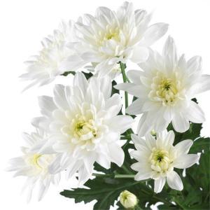 Baltica White