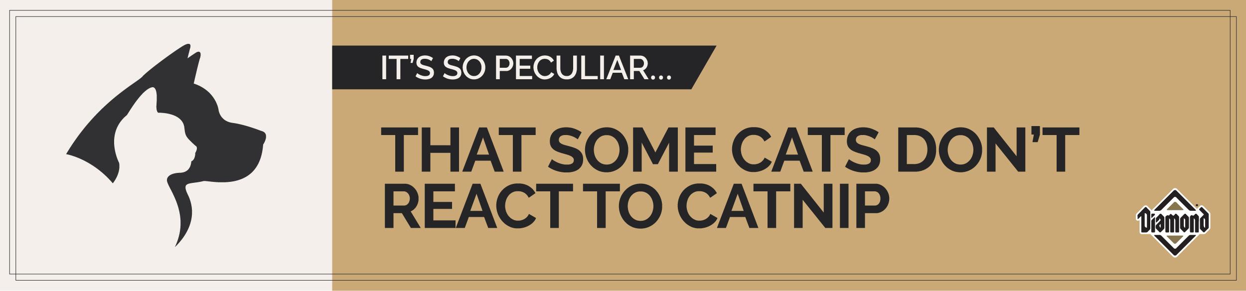 Catnip Text Banner | Diamond Pet Foods