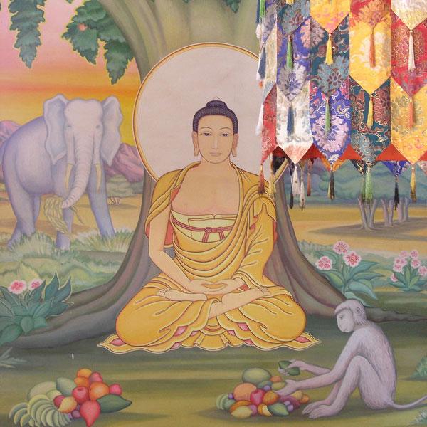 who was buddha a