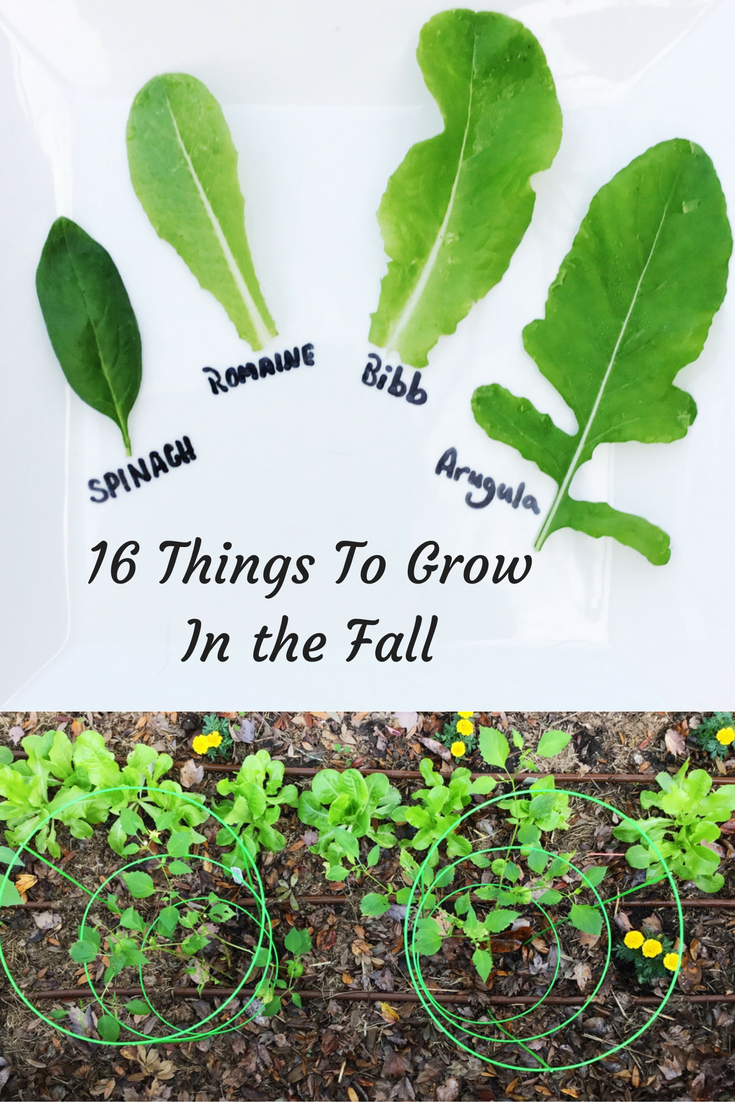 Things-to-grow-in-the-falla