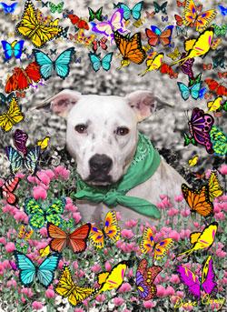 Alyssa in Butterflies