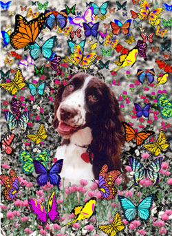Lady in Butterflies