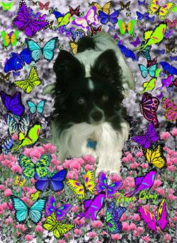 Matisse in Butterflies II