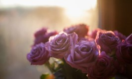 Stepping Out of the Shadows: Photo of backlit roses taken by Katie Long.
