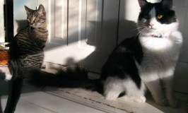 You Are My Gift: Image of two kittens sitting in a sun spot.
