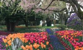 Happy Blogiversary 2019: image of flower gardens in Mt. Vernon, WA, taken by Lori Livesay.