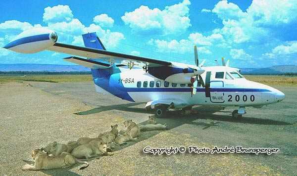 Lions sous ailes avion - Safaris au Masaï Mara par avion de Diani
