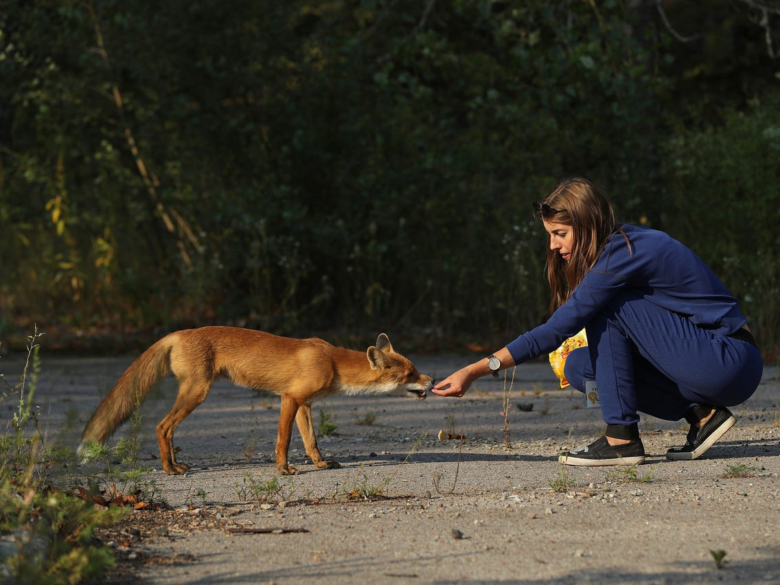 What We Know About The Chernobyl Animal Mutations Dianuke Org