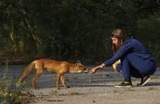 What We Know About the Chernobyl Animal Mutations