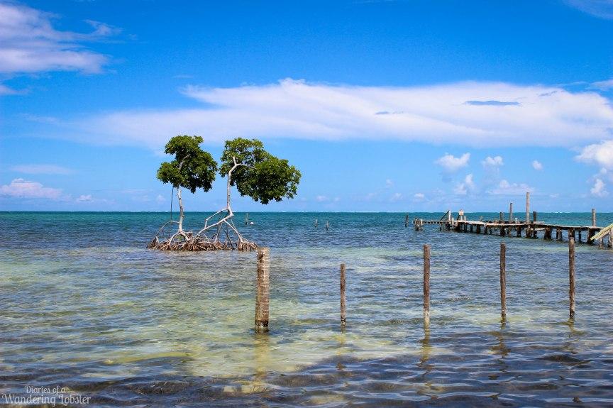 Caye Caulker Belize mangroves