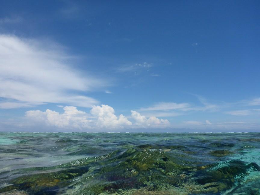 Caye Caulker Belize reef