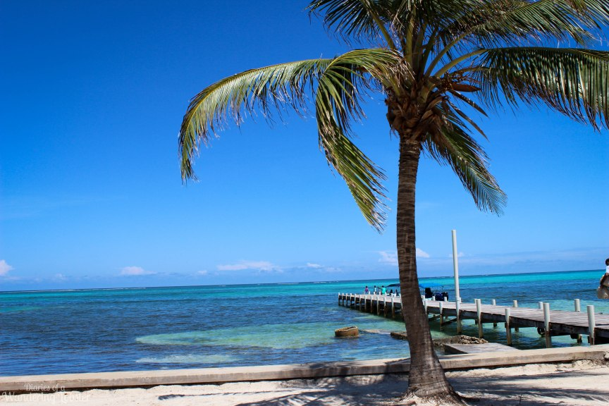 San Pedro Belize palm tree 30 countries by 30